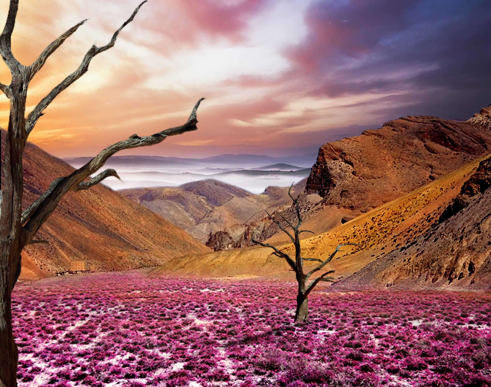 FOTOMONTAGE_Pink_Landscape